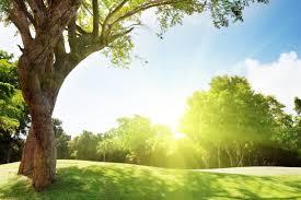 arbre_soleil_terrain